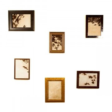 Cow on Wall - Cow Hide Frame